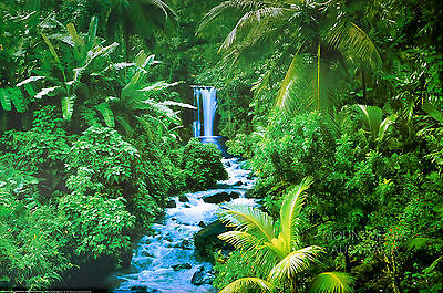(LAMINATED) RAIN FOREST - LANDSCAPE PHOTOGRAPHY POSTER (61x91cm)  NEW LICENSED
