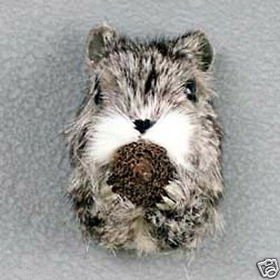SQUIRREL HEAD-Fur Magnets (Handcrafted & Hand painted..Collectable