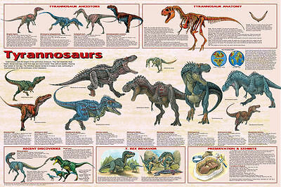 Tyrannosaurus Dinosaurs Poster (61X91Cm) Educational Wall Chart Picture Print