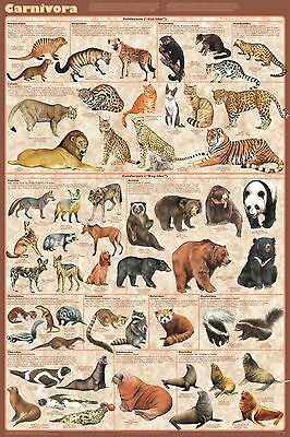(Laminated) Carnivores Carnivora Poster (61X91Cm) Educational Wall Chart New Art