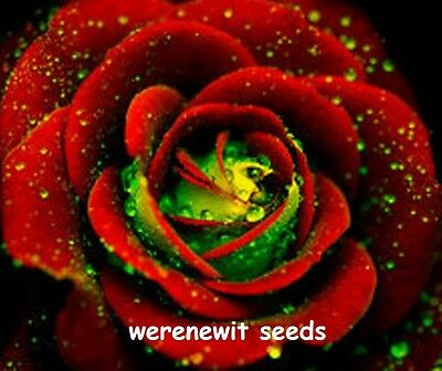 20 X  Rare German Green Heart,red Rose Seeds.free Post+Free Gift,aust Seller