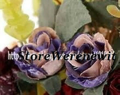 20 X Very Rare Blue Phoenix Rose Seeds,free Post,free Gift,aussie Seller