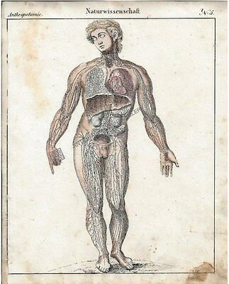 Medical Anatomy Medicine Human Circulatory System Antique Print c.1820