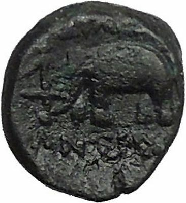 Antiochos III the Great 223BC RARE R1 Seleukid King Greek Coin Elephant  i54827