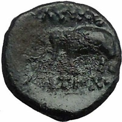 Antiochos III the Great 223BC RARE R1 Seleukid King Greek Coin Elephant  i54836