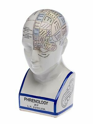 Phrenology head with bust - brain acc. to fowler - porcelain - 11.8 (30cm)""