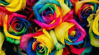 20 X Light Colour Rainbow Rose Seeds,fresh Stock Aussie Seller,free Post