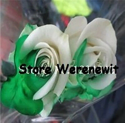 20 x NEW 1/2 GREEN-WHITE ROSE SEEDS(HGF489655642),FREE POST ,AUSSIE SELLER