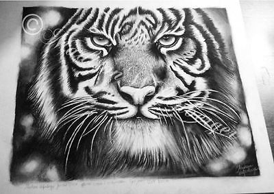 Bengal Tiger PRINTS by MADISON WOLFENBERGER