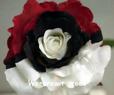 RARE BLACK PEARL ROSE SEEDS x 20,FRESH STOCK+ FREE GIFT AUSSIE SELLER