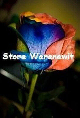 RARE WATER COLOUR ROSE SEEDS x20 FREE POST,FRESH STOCK,AUSSIE SELLER