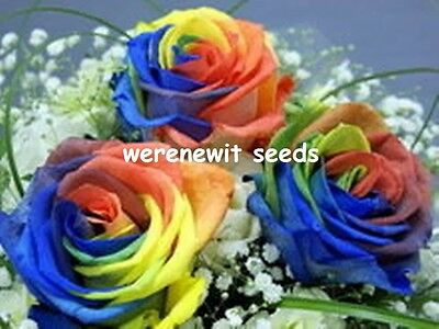 RARE HOLLAND RAINBOW ROSE SEEDS x 20 FREE POST,AUSSIE SELLER