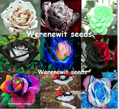 Bulk Lot Of 9 Colours Rose Seeds,individually Packed.free Post