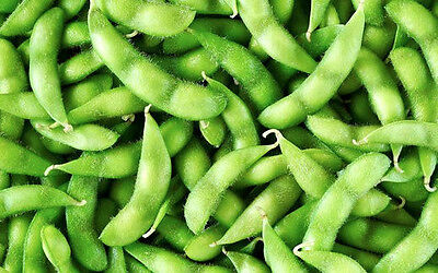 SOY BEAN 50+ seeds CERTIFIED ORGANIC sprout vegetable garden edamame EDIBLE soya