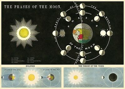 Phases of the Moon - Lunar -  Poster Cavallini & Co 20 x 28 Wrap