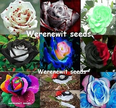 The Rare And Exotic Collection,9 Colour's X 10 Rose Seeds+Free Gift,free Post