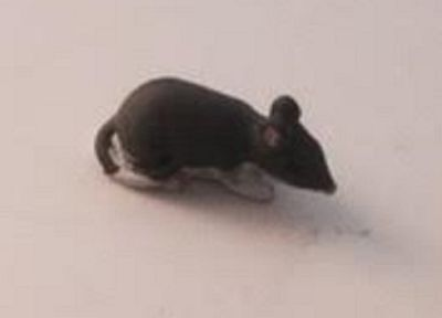 Dolls House Miniature 1/12th Scale Resin Mouse White or Grey
