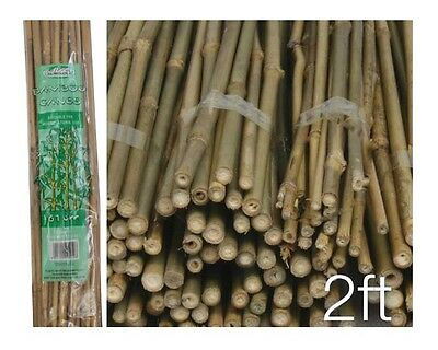 Pack of 40 Wooden Natural Bamboo Garden Canes Plant Canes Strong Support - 2ft