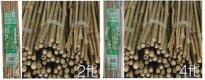 2FT 4FT Wooden Natural Bamboo Garden Canes Flower Plant Canes Strong Support
