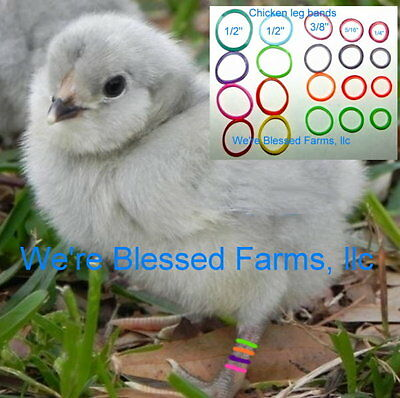 We're Blessed Farms ~Chicken chick LEG BANDS multi color ELASTIC~USA MADE SOLD