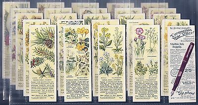 Typhoo-Full Set- Wild Flowers In Their Families 2Nd Series - Exc