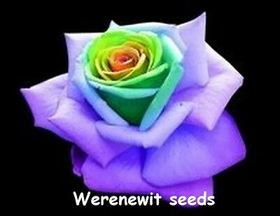 20 x NEW WORLDS RAREST EXOTIC YELLOW -GREEN HEART PURPLE ROSE SEEDS,FREE POST