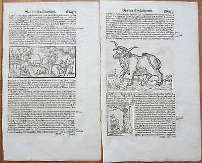 MÜNSTER/MUNSTER: Cosmographia On Russia Woodcuts 2 Leaves - 1592