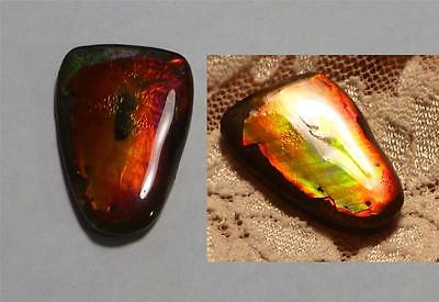 12.5 carats! Red to Green Change AMMOLITE Finished Gemstone 25x17mm