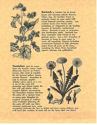 BOOK OF SHADOWS Spell Pages ** Common Herbs Used In Smudging