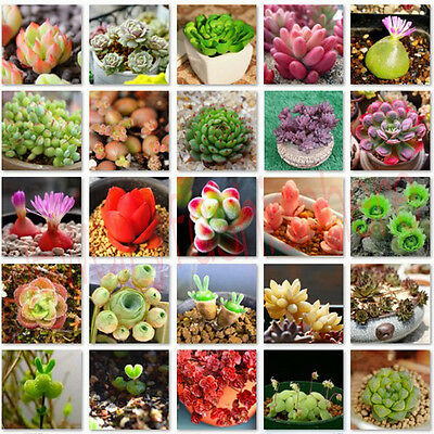 80-100Pcs Succulents Seeds Rare Mini Potted Flower Seeds Home Office Decorative
