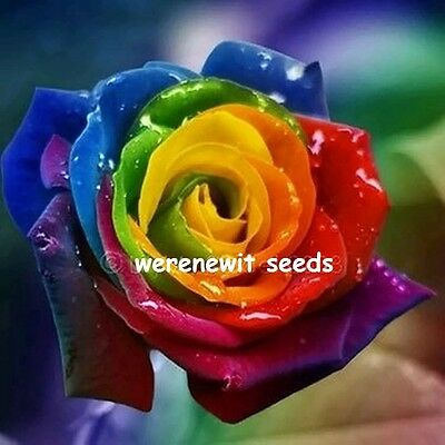 20 X Hard To Get Rainbow Rose Seeds,do Not Miss Out,limited Stock,aussie Seller