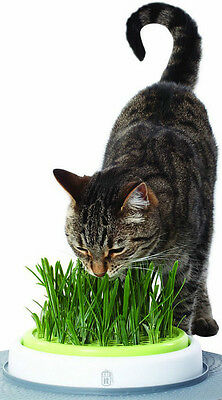 90g UK Certified Organic WHEAT Cat Grass