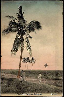 Singapore - Vintage Postcard - Cocoa-Nut Trees - Workers