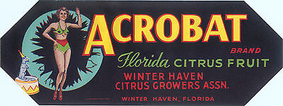 Crate Label Vintage Florida 1930S Strip Acrobat Circus Trick Dog Winter Haven