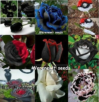 Collection Of Exotic Rare,black 9 Colours X 10 Seeds+Free Gift,free Post