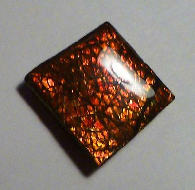 RED Dragonscale AMMOLITE Finished Gemstone 18x16.5mm 22cts!
