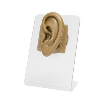 Realistic Adult-Sized Silicone Left Ear Display - Tan Body Bit Version 2