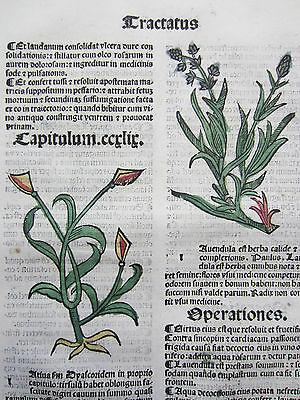 Incunable Leaf Hortus Sanitatis Lavender Colored Woodcut Venice  1500