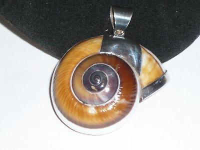 A Large Nautilus Shell Pendant Sterling Silver For A Chain Necklace Jewelery 925