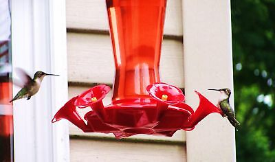 Hummingbird Bird Digital Print Wings at Play Nectar Feeder Outdoor Nature Photo
