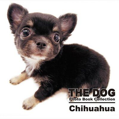 THE DOG Photo Book Collection Chihuahua (THE DOG Photo Book Collection)