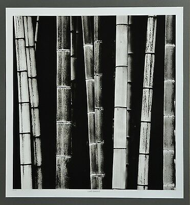 Josef Hoflehner Photo Kunstdruck Poster Art 50x53cm Giant Bamboo 3 Japan Bambus