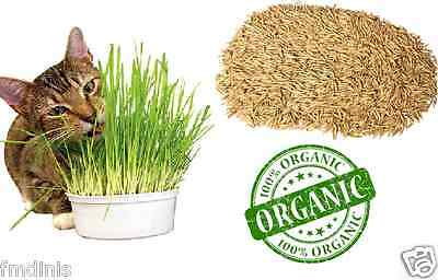 100% Pure Natural Oat Grass Seeds Cat Rabbit Pet +/- 10,000 Seeds