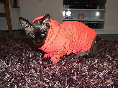 THE HOODY...Hand Made Sphynx Cat Clothes for those Pampered Pets..
