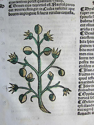 Incunable Leaf Hortus Sanitatis Capers Colored Woodcut Venice  1500