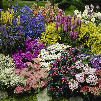 Pack of 12 Mixed Winter Hardy Perennial Plants in 9cm Pots