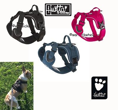 Hurtta Dog Active Harness Fully Adjustable Black Pink french bulldog Outdoors