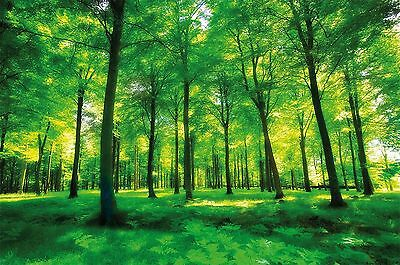 Forest photo wallpaper  green forest mural  XXL forest glade wall decoration