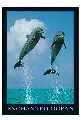 Delphine Dolphins Poster Enchanted Ocean