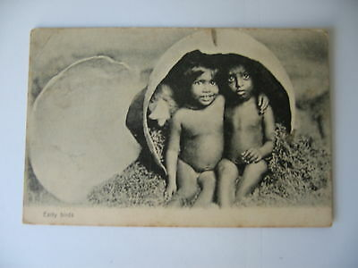 POSTCARD ETHNIC  Early Birds